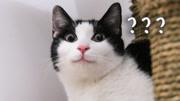 如何领养一只猫咪?