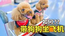 带狗狗坐飞机去海南度假